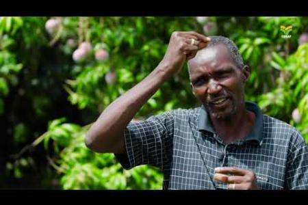 """Embedded thumbnail for Burkina Faso : Les producteurs de mangues """"dégustent"""" les acquis du projet Mouches de Fruits"""